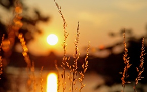 Picture the sun, macro, light, sunset, background, widescreen, Wallpaper, vegetation, plant, blur, wallpaper, ears, widescreen, background, …