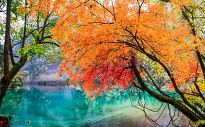 Picture autumn, leaves, trees, lake, China, Jiuzhai valley national Park, Sichuan