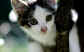 Picture kitty, muzzle, tree branch, cute