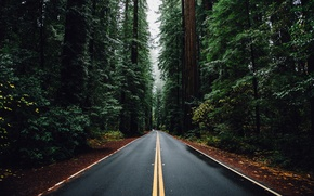 Picture road, machine, forest, trees, Nature