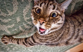 Picture language, cat, face, fright