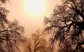 Wallpaper the sun, trees, branches