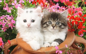 Wallpaper flowers, small, Kittens, fluffy