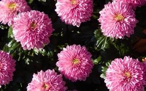 Picture flower, grass, flowers, widescreen, Wallpaper, wallpaper, widescreen, background, the Wallpapers, full screen, HD wallpapers, widescreen, ...