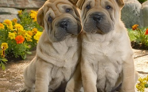 Picture dogs, true friends, cuties