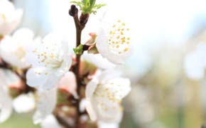 Picture macro, flowers, spring