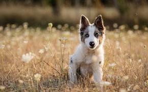 Wallpaper dog, grass, puppy, meadow