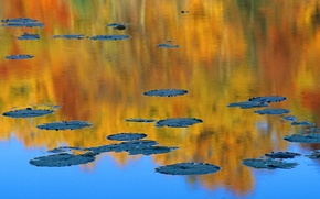 Picture autumn, pond, reflection, Canada, water lilies, QC