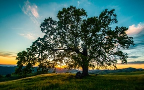Picture the sky, sunset, tree, meadow