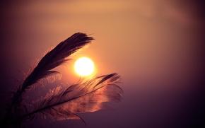 Picture dawn, pen, sky, sunset, feathers, sun