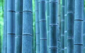 Picture macro, nature, bamboo
