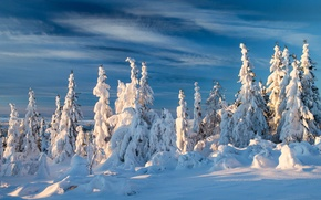 Picture winter, snow, ate, Norway, Norway
