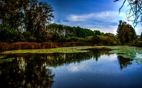 Picture photo, Nature, Trees, River, Germany, Munich, Isar
