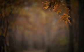 Picture blur, branch, Park, alley, autumn, leaves