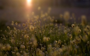 Picture field, light, flowers, nature