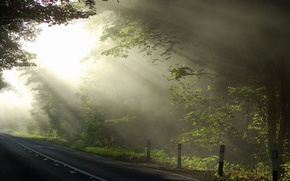 Picture road, light, trees, nature
