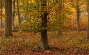 Picture autumn, forest, tree, Autumn colour