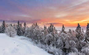 Picture winter, snow, forest.the sky