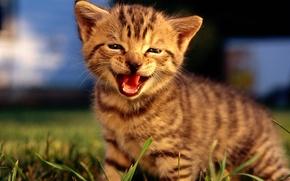 Wallpaper smile, kitty, nature