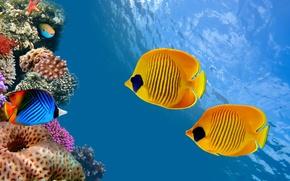 Picture sea, ocean, nature, water, animal, fish, starfish, reef, America, sugoi, subarashii, coral, tourism, Costa Rica, ...