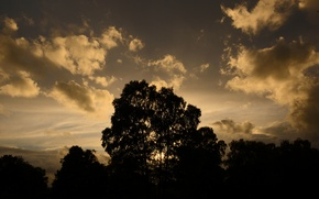 Picture the sky, clouds, trees, landscape, nature, silhouette