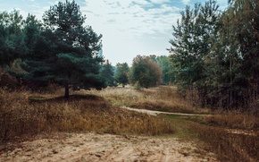 Picture road, grass, trees, Russia, pine