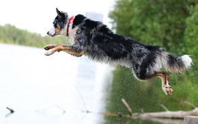 Picture each, jump, dog, dog