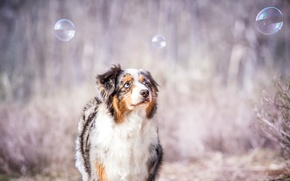 Picture look, bubbles, each, dog