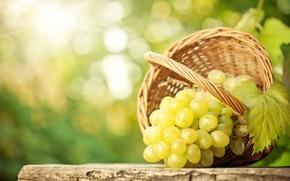 Wallpaper bokeh, sheet, table, basket, grapes, bunch