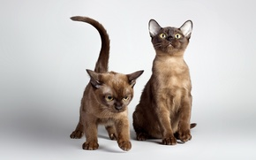 Picture light, background, cats