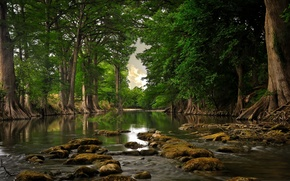 Picture forest, summer, nature, river