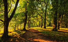 Picture forest, trees, the fence, track, Sunny, alley, path, coniferous