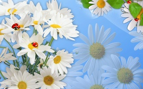 Picture flowers, nature, collage, ladybug, Daisy, insect