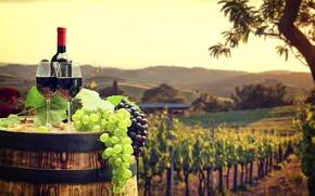 Picture field, leaves, landscape, red, green, wine, bottle, glasses, grapes, tube, barrel, bokeh, plantation