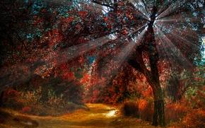 Picture road, autumn, light, nature, tree