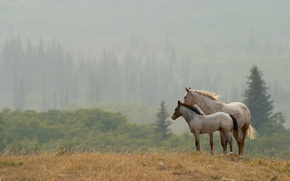 Wallpaper landscape, nature, horses