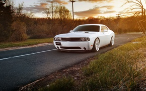 Picture white, dodge challenger, muscle car, Challenger