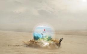 Wallpaper sand, ball, snail