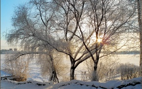 Picture winter, the sun, rays, snow, trees, branches, morning