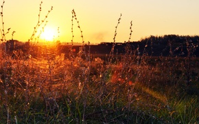 Picture grass, landscape, sunset, web, the evening