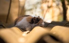 Wallpaper cat, sunlight, branch, roof, bokeh, tree, shadow, sleep, lazy