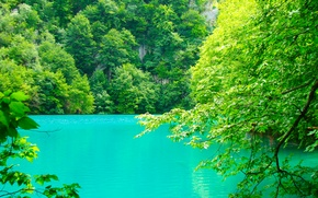 Picture greens, summer, leaves, water, trees, branches, nature, lake, rocks, pond, Croatia, Plitvice lakes, blue-green