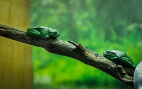 Picture green, tree, aquarium, branch, toad, frog, zoo
