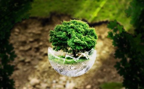 Picture forest, glass, light, tree, ball
