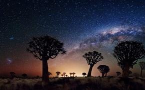 Picture Joshua Tree, night, stars