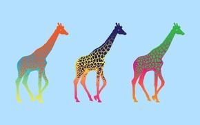 Picture minimalism, giraffe, colorful, giraffe, pop art