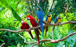 Picture group, Forest, parrots