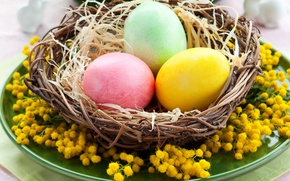 Picture photo, Easter, Eggs, Basket, Holiday, Mimosa