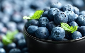 Picture blueberry, bowl, berries, berries, blueberries, fresh, blueberries
