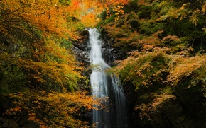 Picture autumn, forest, rock, waterfall, stream